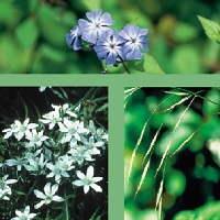 Las flores de Bach como terapia alternativa