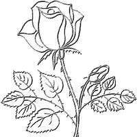 Escritos de motivación a los deseos: La Rosa de papel